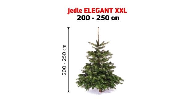 Jedľa Elegant XXL